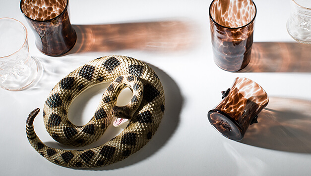 Image Description: The photograph is shot from above and there is a large fake snaked curled up in the lower lefthand corner that is tan with dark brown spots. There are five glasses in the photo. Three are speckled with a dark brown and two that are transparent with a slight warm-toned tan tint.